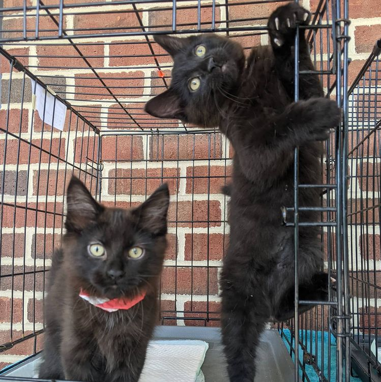 The cutest cats: Pablo and Natalia in the Meow Market